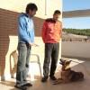 CARLOS MAGARIÑOS ADIESTRADOR CANINO en Leganes - Foto13