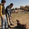 CARLOS MAGARIÑOS ADIESTRADOR CANINO en Leganes - Foto4